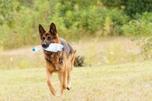 run dog 2